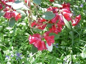 Blossoms at Stoneyeell